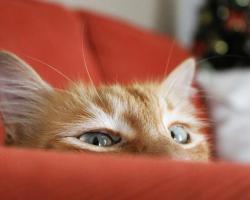 В Голландии женщина случайно постирала кота в машинке