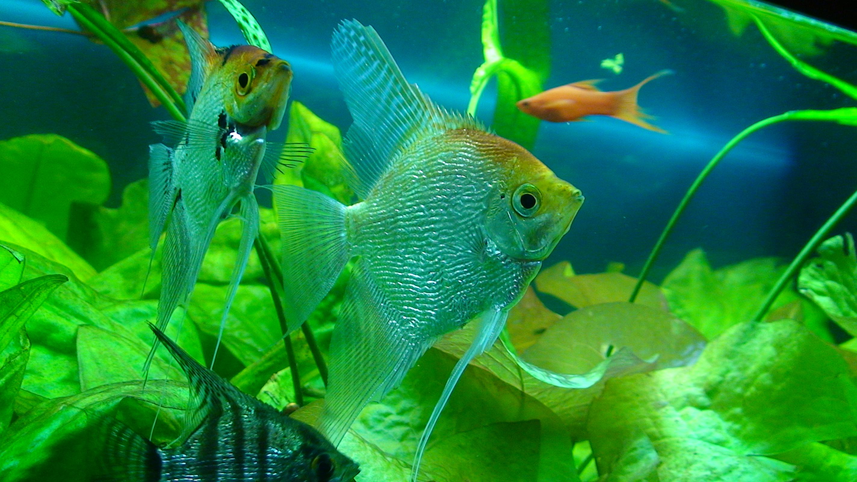Жительница Лондона заказала на eBay стеклянный стол, а получила 150 тропических рыбок